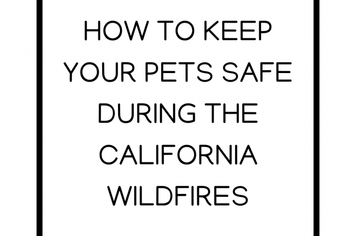 How to Keep Your Pets Safe During the California Wildfires