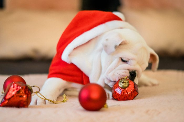 The Ultimate Holiday Gift Guide for Pets