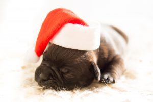 pros and cons of buying pets as christmas presents