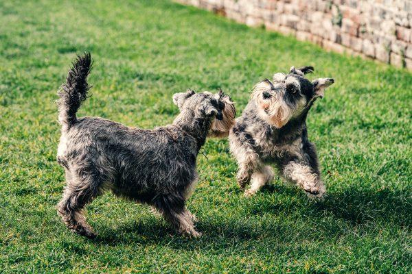4 Simples for Dog Park Etiquette