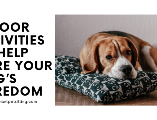 Indoor Activities to Help Cure Your Dog's Boredom