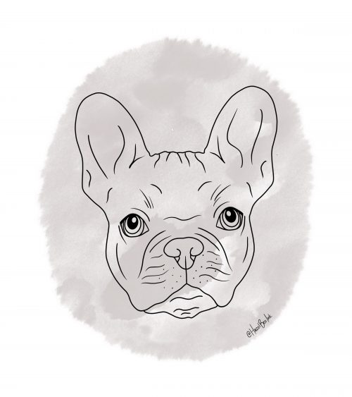french bull dog pet portrait