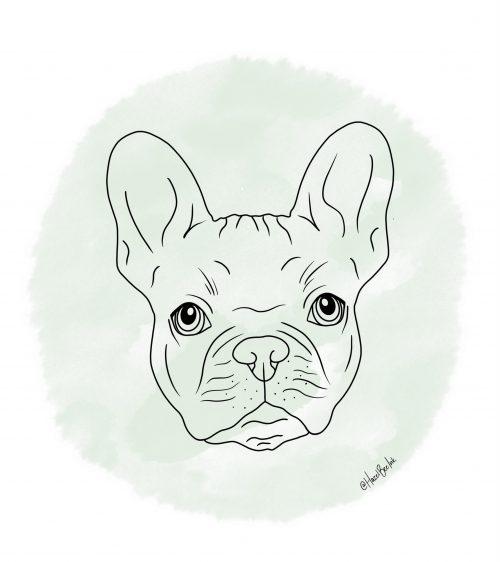 French Bull Dog Pet Portrait