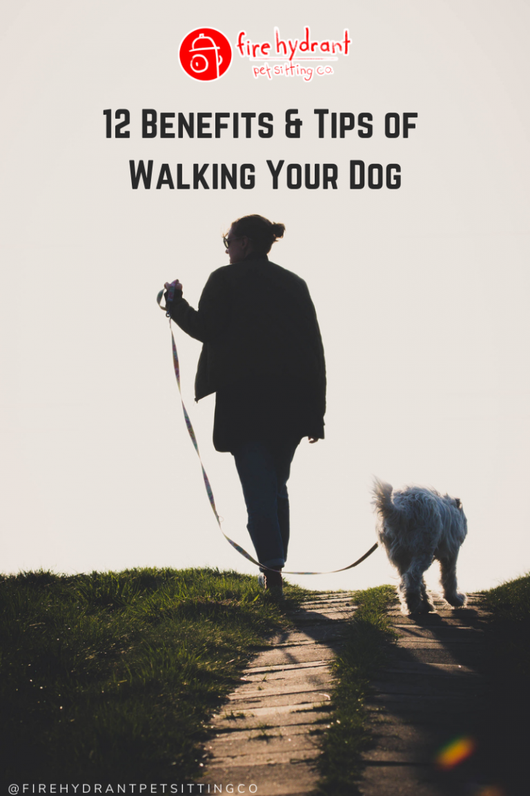 12 Benefits & Tips of Walking Your Dog